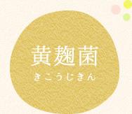 黄麹菌(きこうじきん)