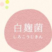 白麹菌(しろこうじきん)